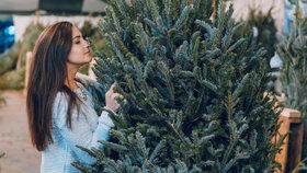Jak vybrat vánoční stromek: Který neopadá ani ve vytopené místnosti?
