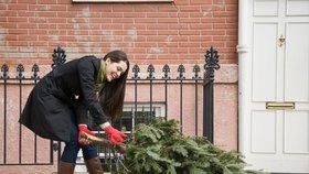 4 kroky, jak zlikvidovat vánoční stromeček bez velkého nepořádku