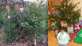 Zachráněné Vánoce: Lesníci darují 400 stromků dětem bez domova
