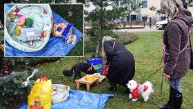 Psi měli v Praze předčasný Štědrý den. Lidé jim nosili obojky i pamlsky
