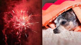 Aby vaše zvíře na Silvestra nezešílelo. Osm rad, jak s mazlíčky přežít hluk