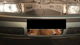 Pojistné trable Čechů: Obtěžování Obamy, pojistka panenství i liška v autě