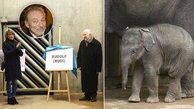Nejmladší slůně Zoo Praha je Rudolf: Křtít ho měl Karel Gott, za sebe poslal dopis