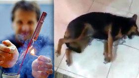 I tohle udělá obyčejná rachejtle se psem! Děsivé video záchvatu po odpálení římské svíce