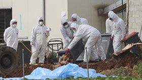 Téměř 140 tisíc slepic zemře. Nebezpečnou ptačí chřipku na Pardubicku testy potvrdily