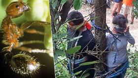 Brutální poprava: Mravenci svázaný pár málem sežrali zaživa, policisté je zachránili