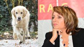 """Krnáčová chce zase řešit volné pobíhání psů. Praha to už jednou """"slízla"""""""