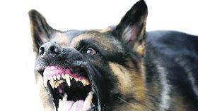 Kradl bonbony a lepidla: Opilého zloděje v prodejně vyštěkal policejní pes Cherus