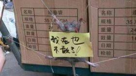 Krysa kradla prodejci rýži, ten ji veřejně mučil. Fotky znechutily internet