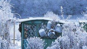 Co se zahradou v zimě? Řízkujte a pěstujte mrazuvzdornou zeleninu