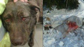 Krutý majitel zbil psa, svázal ho do pytle a zahrabal do sněhu!