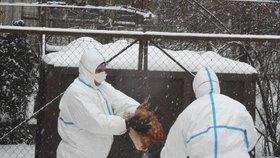 Ptačí chřipka stopla vývoz: V zahraničí nechtějí českou drůbež ani vejce