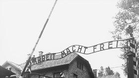 Hnus v Osvětimi. Před koncentračním táborem se naháči spoutali a zabili ovci