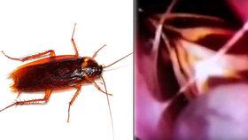 Něco se mi uvnitř hýbe: Ženě vytáhli nosem z lebky živého švába!
