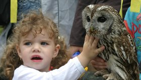 Zažijte dobrodružství v pražských lesích: Vyrazte »za sovím houkáním«