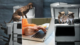 Štěně koupené přes internet je často pes z množírny, varují aktivisté