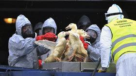 Následky ptačí chřipky: Obce na jihu Moravy čeká dezinfekce!