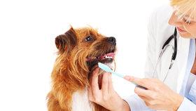 I pes nebo kočka by měli mít svého zubaře