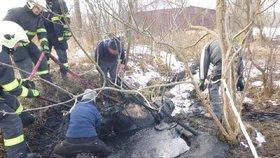 Boj o život koně na Břeclavsku: Zapadl do bahna až po uši