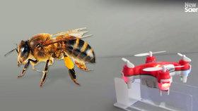 Místo včel mají přírodou létat opylovací drony. Čouhají z nich koňské žíně