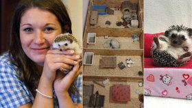 """Monika má v domě na Černém Mostě 23 ježků: """"Je to zvíře moderní doby,"""" říká"""