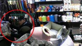 Zloděje peněz pro psí útulek chytila policie: Hrozí jim dva roky vězení