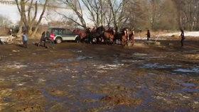 Kruté video: Benešovský statkář najížděl autem do vlastních koní