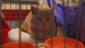 50 koček bude hledat nový domov: Na výstavě nakoupíte i krmivo za dobré ceny
