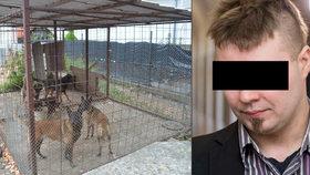 Mirečkovi (†5) psi v Lužci roztrhali krk, tělíčko trhali i po jeho smrti, popsal u soudu znalec
