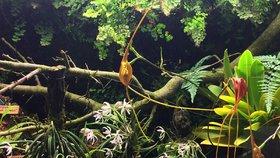 50 let botanické zahrady: První expozici vidělo 20 tisíc lidí. Letos návštěvníky čeká netradiční kámasútra