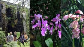 Záplava orchidejí: Botanická zahrada vystavuje tisíc barevných rostlin