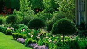 Zakládáme trávník - praktické rady pro hustý zelený koberec