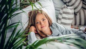 Jak vyčistit vzduch v bytě? Pořiďte si tyto rostliny
