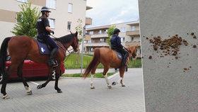 Výkaly po policejních koních na ulici: Jak je to s úklidem?