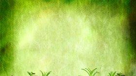 Bylinky můžete pěstovat i v bytovce: Dobře chutnají a prospívají zdraví