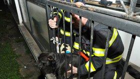 Pes uvízl hlavou v zábradlí balkonu: Zachránili ho přivolaní hasiči
