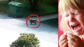 Karolínku (4) pokousal agresivní pes: Rodiče se obávají vztekliny