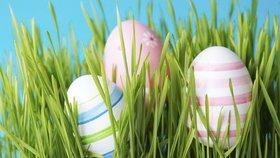 Velikonoční osení: Pravý čas ho zasadit!