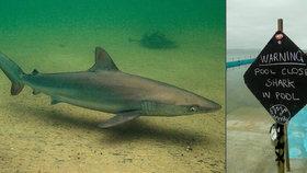 Plavce v australském bazénu vyděsil žralok. Bylo to metrové mládě