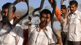 Kobra dala muži polibek smrti: Hodinu po hadím uštknutí zemřel