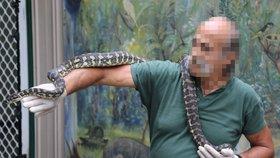 Ve varně pervitinu byla i krajta-narkomanka. Zmatený had musel na detox