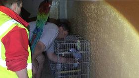 Požár v bytě na Hájích: Muž se popálil, papoušek Oskar se nadýchal kouře