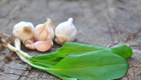 Jarní bylinky: Které jsou léčivé a které skvěle chutnají?