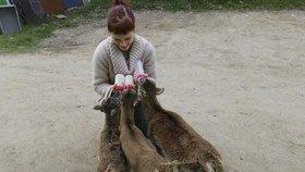 V Praze dostává pomoc čím dál víc divokých zvířat. Letos jich byly už tisíce