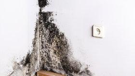 Jsou na stěnách, v koupelnách, za nábytkem… Skoncujte s plísněmi v bytě!