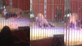 Útok lva v cirkuse: Šelma se zakousla krotiteli do krku!