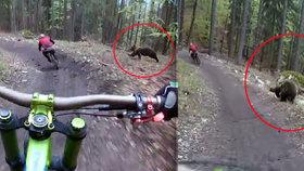 Dva české bikery naháněl na Slovensku medvěd! Otřesný zážitek zachytili na kameru