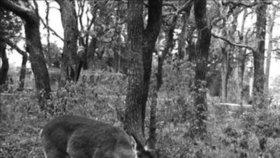 Laň přistihli na hostině z lidských ostatků. Máme se jelenů v lese začít bát?