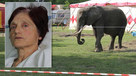 Seniorka ze Zlína chtěla nakrmit cirkusového slona: Zvedl ji do výšky a vážně zranil