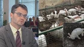 """Králíkům v """"miniklecích"""" pomáhá EU: Českým chovům hrozí problémy, říká Polčák"""